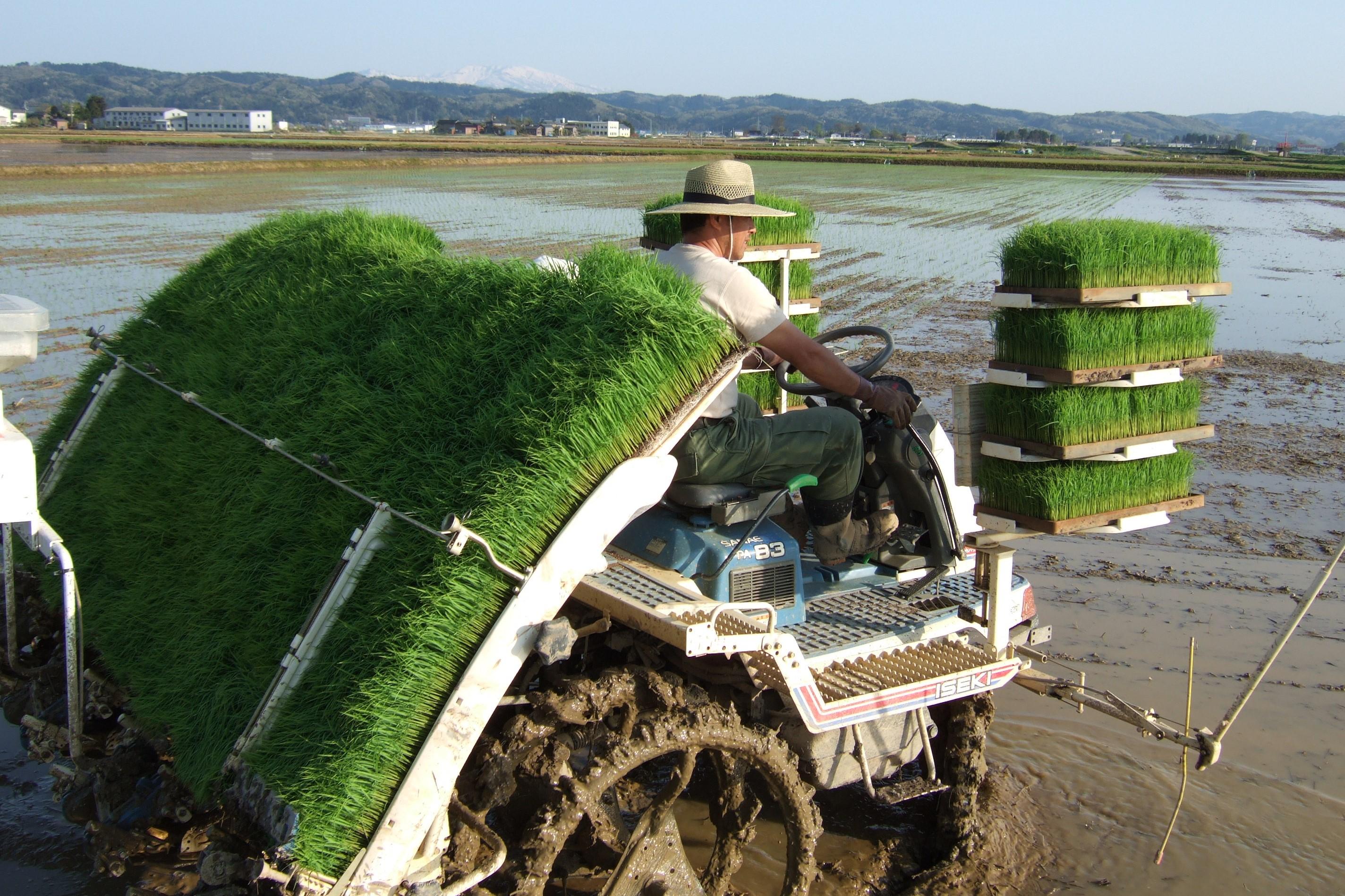 「植酸栽培」と「鮭のぼかし肥料」
