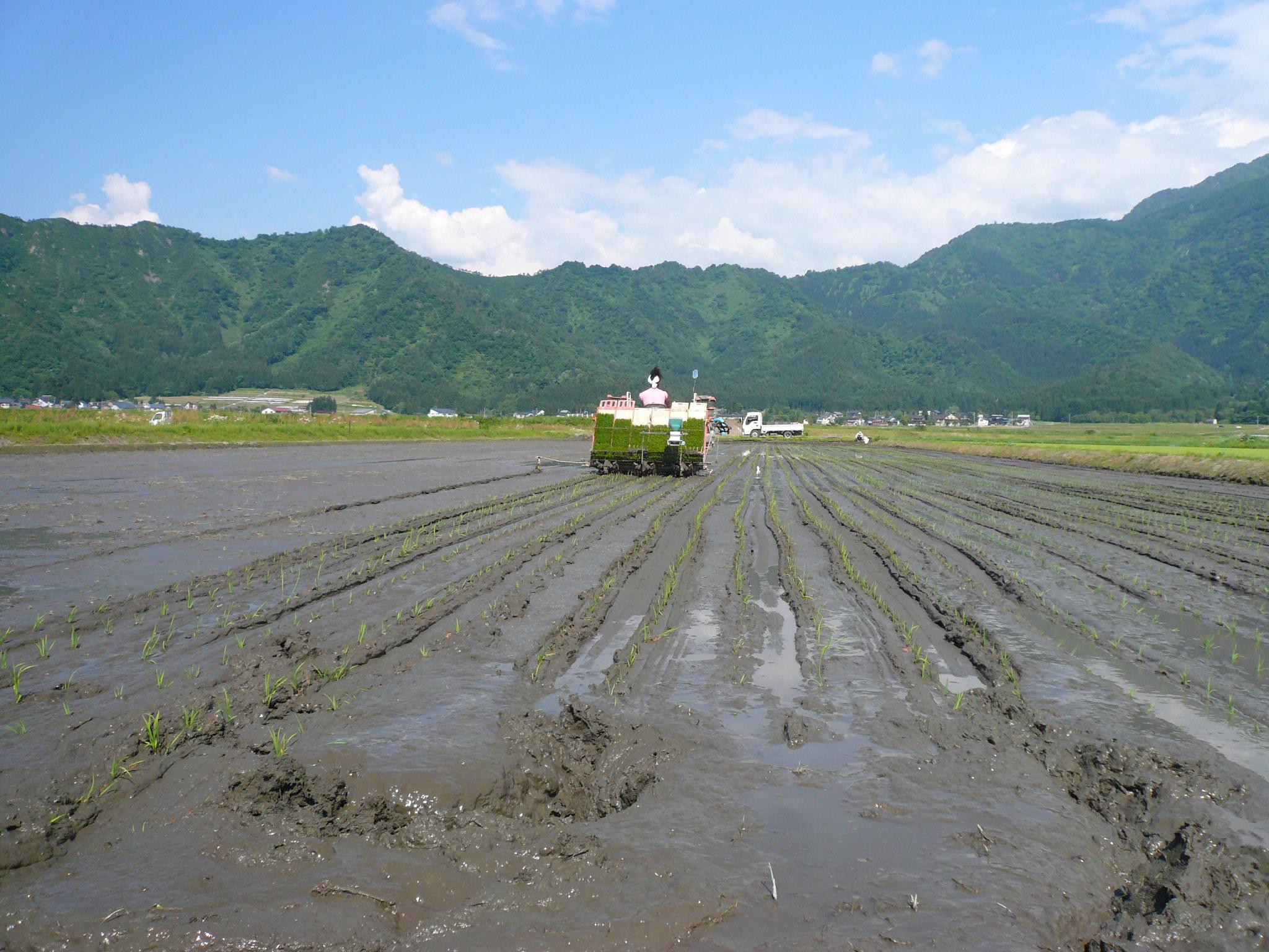 魚沼の農薬を使わない米作り