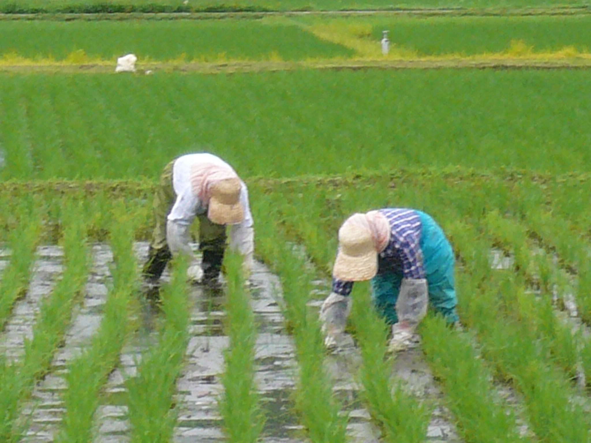 自然微生物農法
