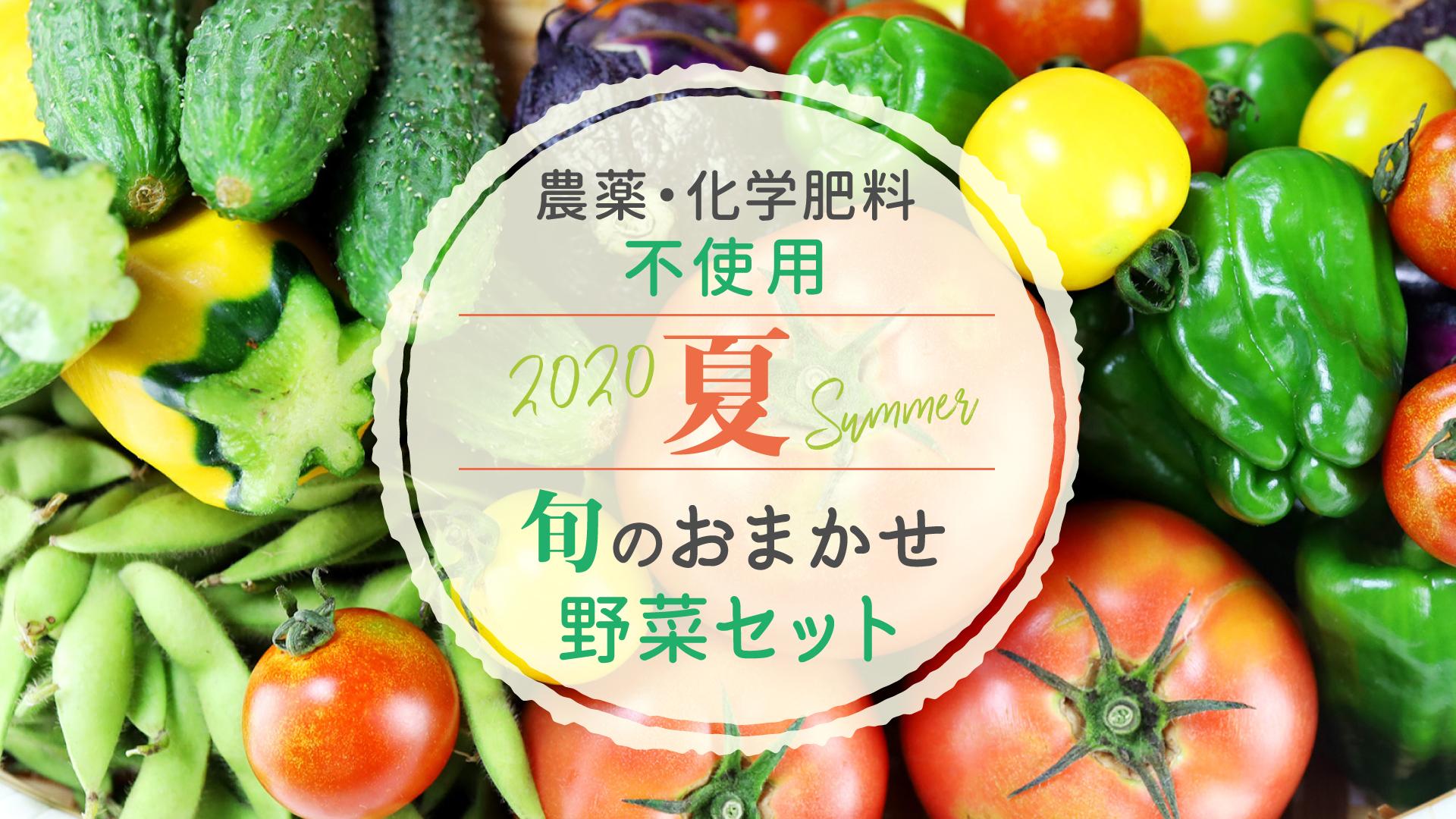 農薬・化学肥料不使用 旬のおまかせ野菜セット(夏)